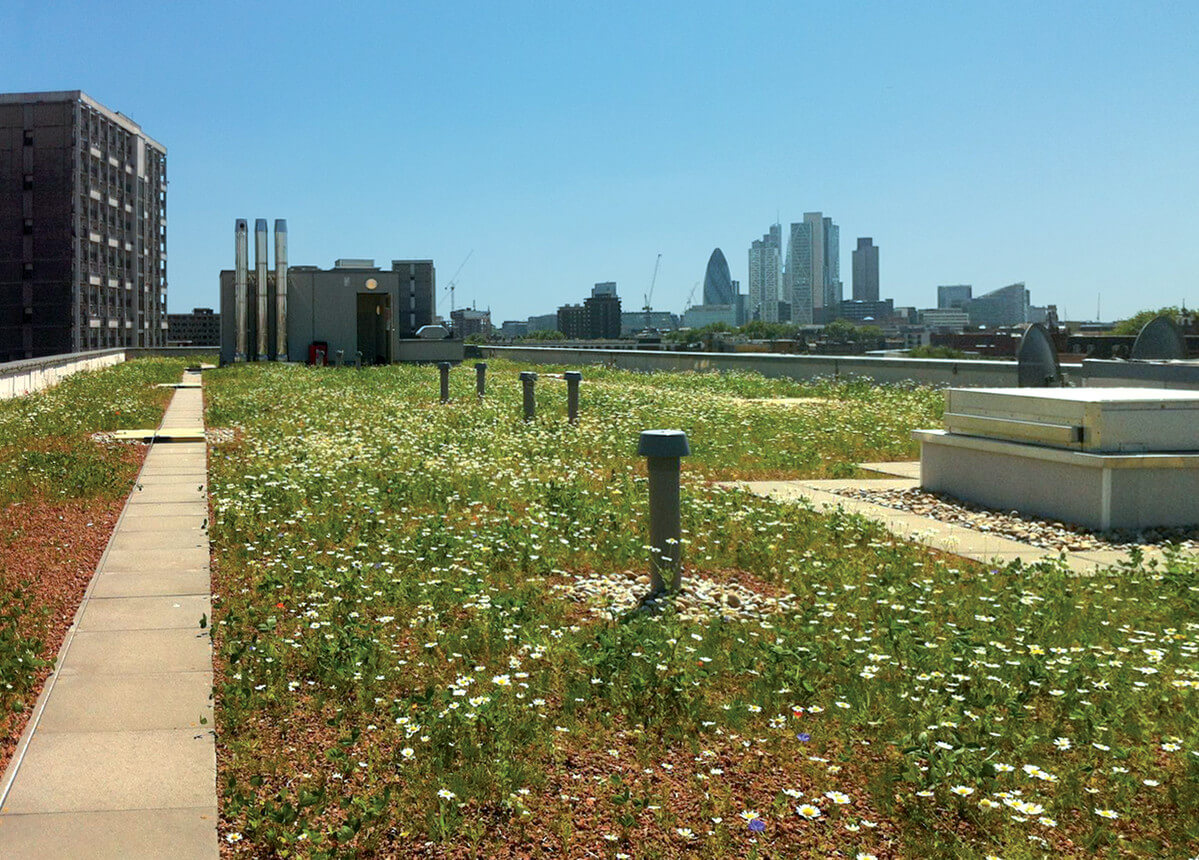 Green roofs and stormwater management